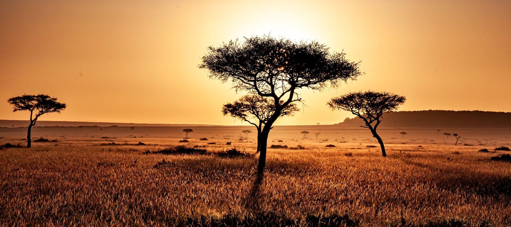 Nyar Maasai